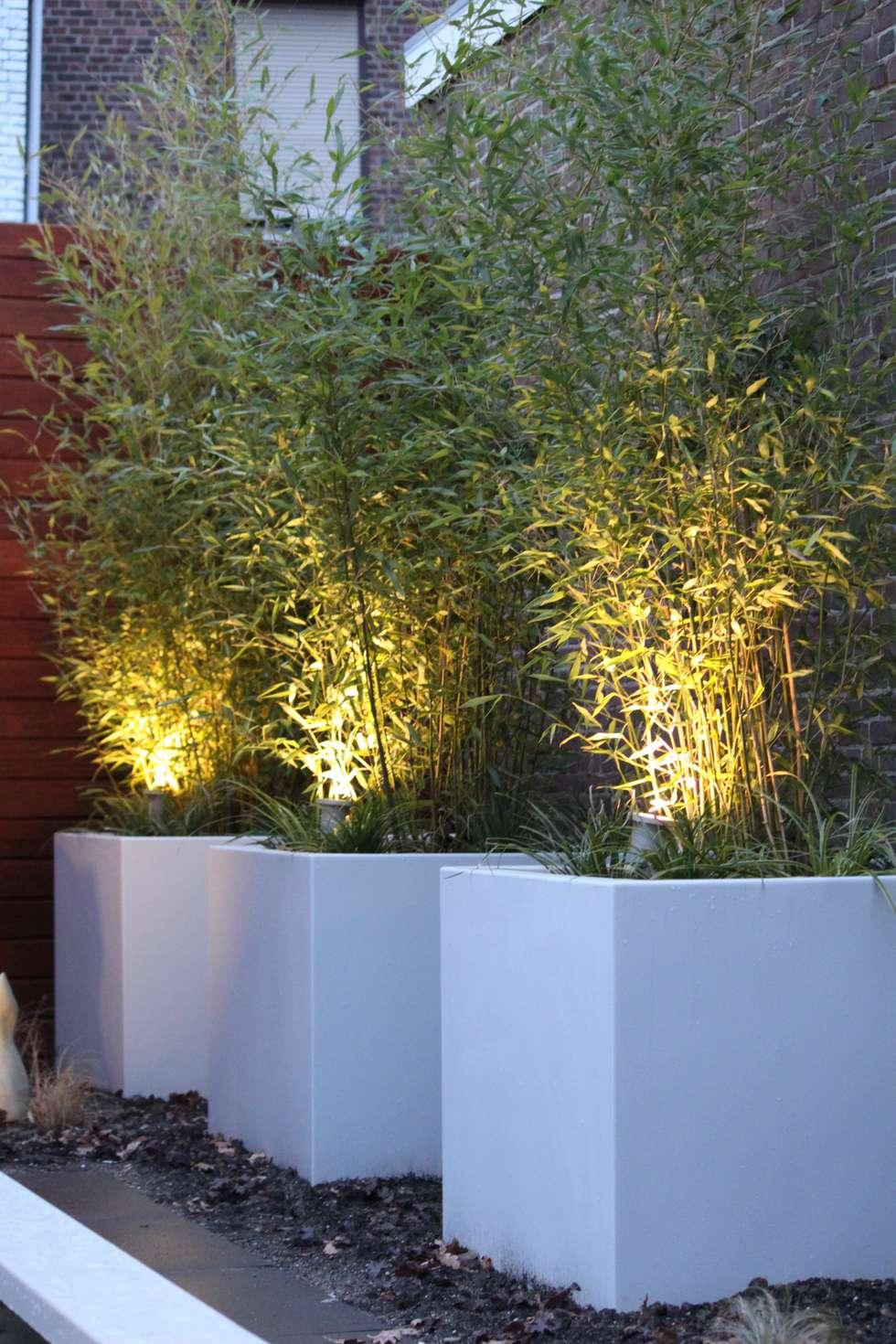 Bloembakken met bamboe: moderne Tuin door Hoveniersbedrijf Guy Wolfs