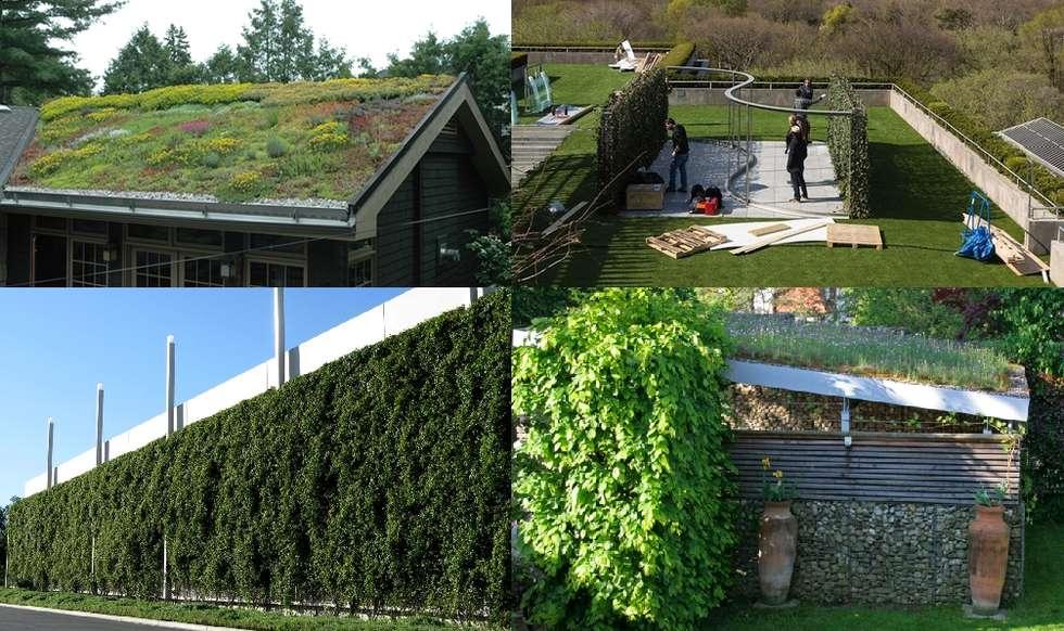 Tetto verde e giardino pensile: Giardino in stile in stile Mediterraneo di Dotto Francesco consulting Green