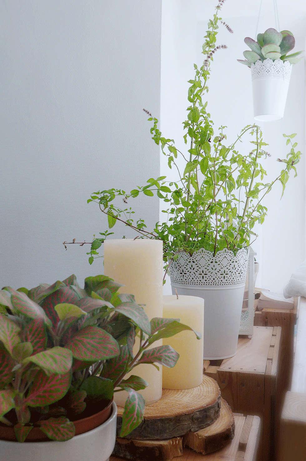 Une séparation végétale et originale: Chambre de style de style eclectique par Skéa Designer