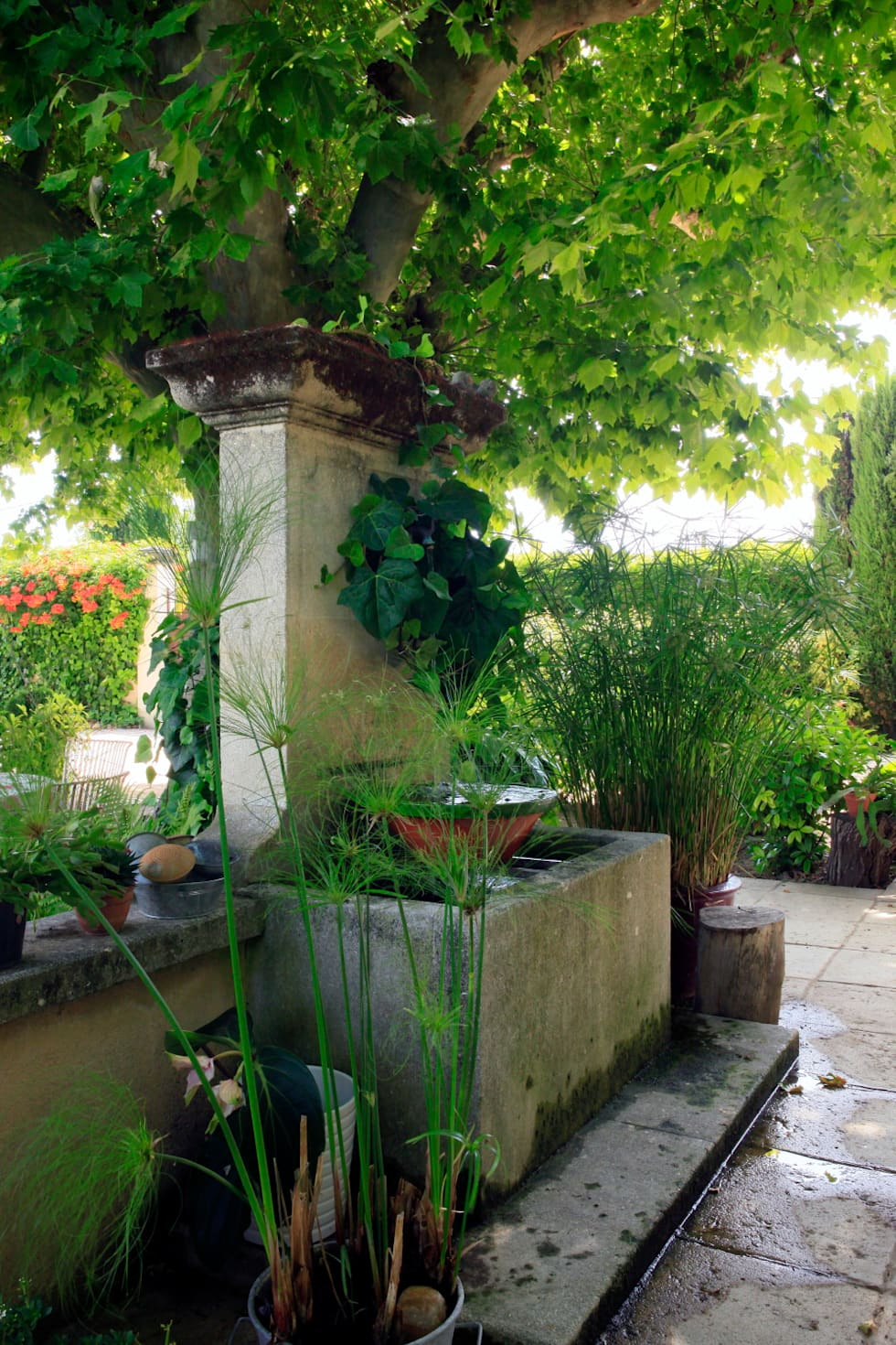 Jardin champêtre: Jardin de style de style Méditerranéen par CONCEPTUELLES PAYSAGE ET DECORATION