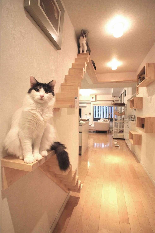 modern Corridor, hallway & stairs by 一級建築士事務所 かねまき・こくぼ空間工房