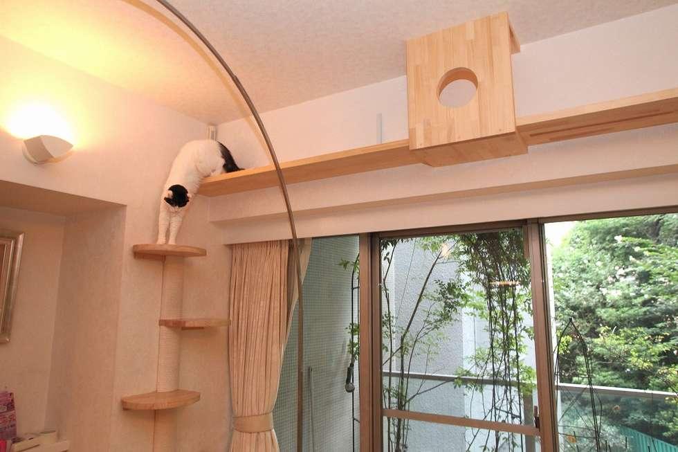 modern Living room by 一級建築士事務所 かねまき・こくぼ空間工房