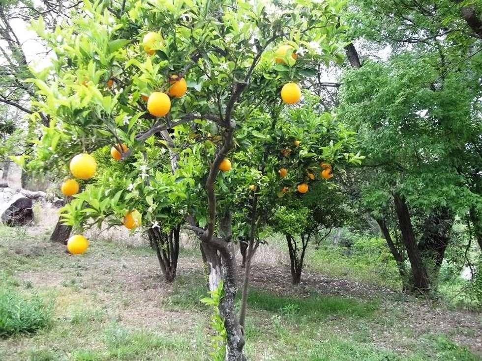 árboles frutales: Jardines de estilo colonial por Liliana almada Propiedades