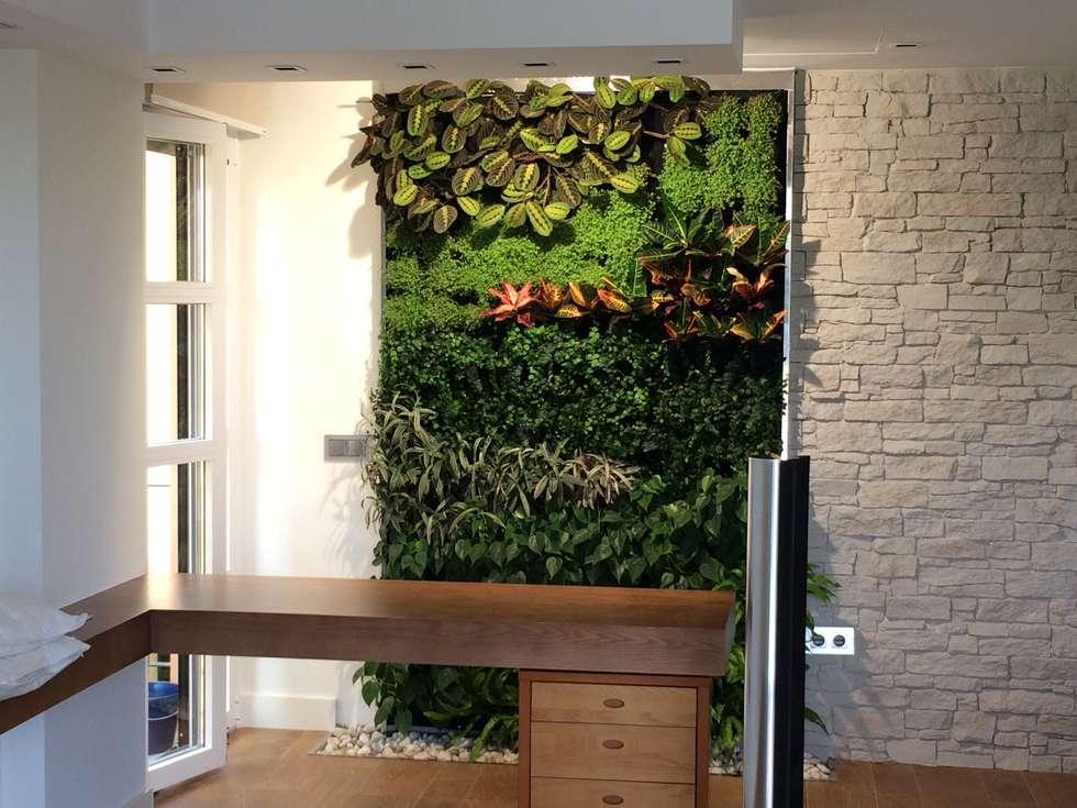 Fotos de decoraci n y dise o de interiores homify for Jardines interiores modernos