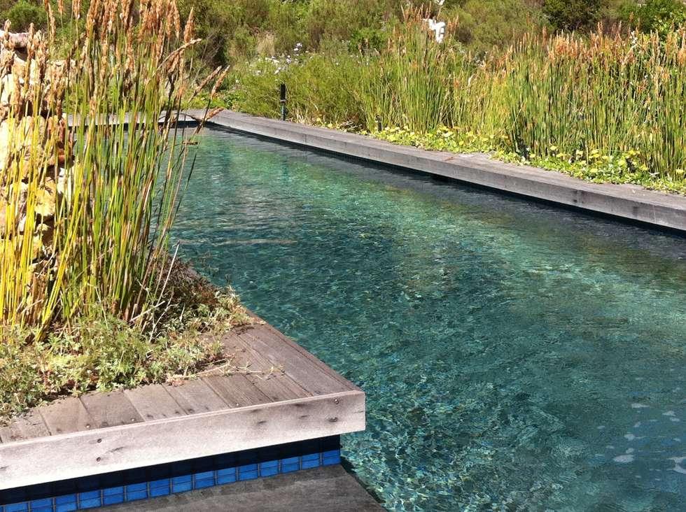 Lap Pool set in fynbos: country Pool by Red Daffodil
