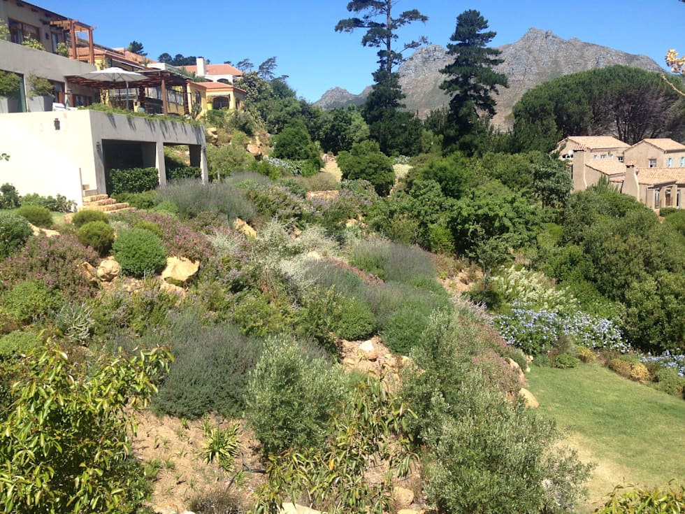 Hout Bay : mediterranean Garden by Red Daffodil