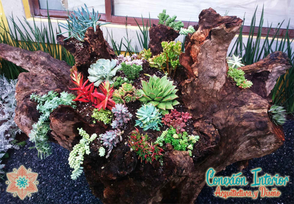 tronco en jardin con diseo de plantas suculentas jardines de estilo rstico por conexion interior