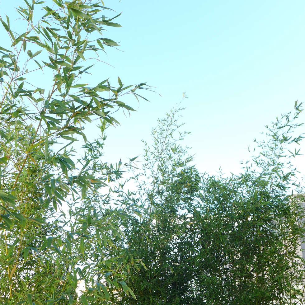 Feuillage de bambous sur fond de ciel bleu: Terrasse de style  par Skéa Designer