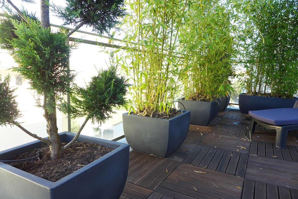 Plantes en pots: Terrasse de style  par Skéa Designer