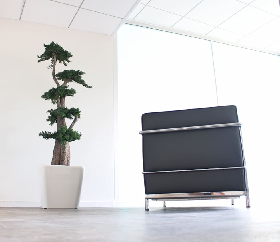 Végétal stabilisé: Bureaux de style  par Green Time