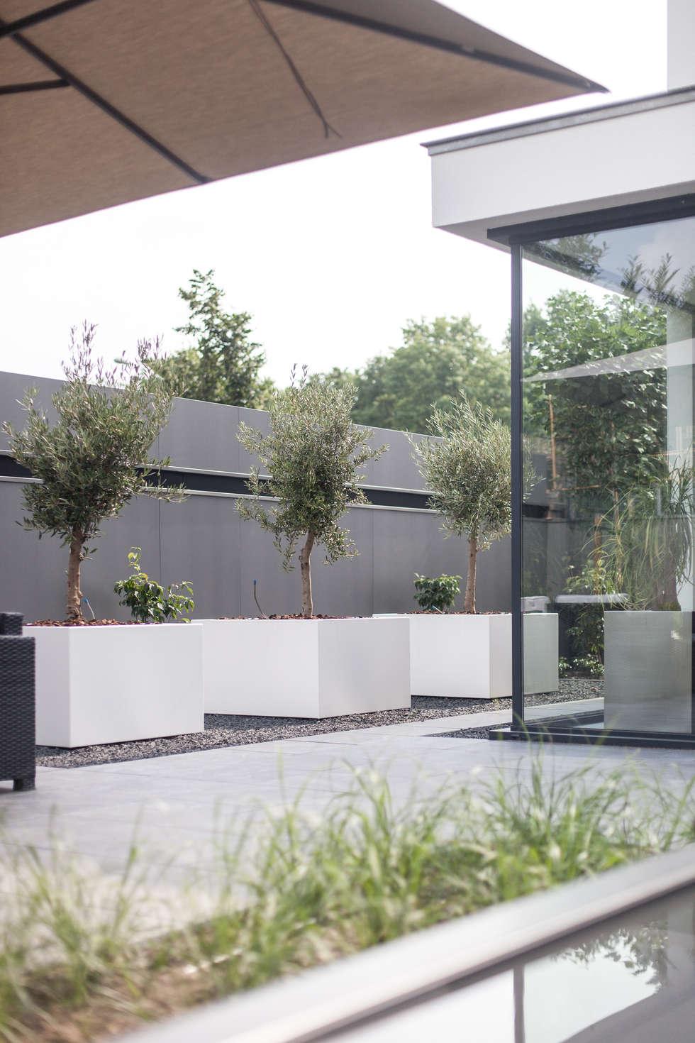 Tuinkamer - modern: moderne Serre door Bob Romijnders Architectuur & Interieur