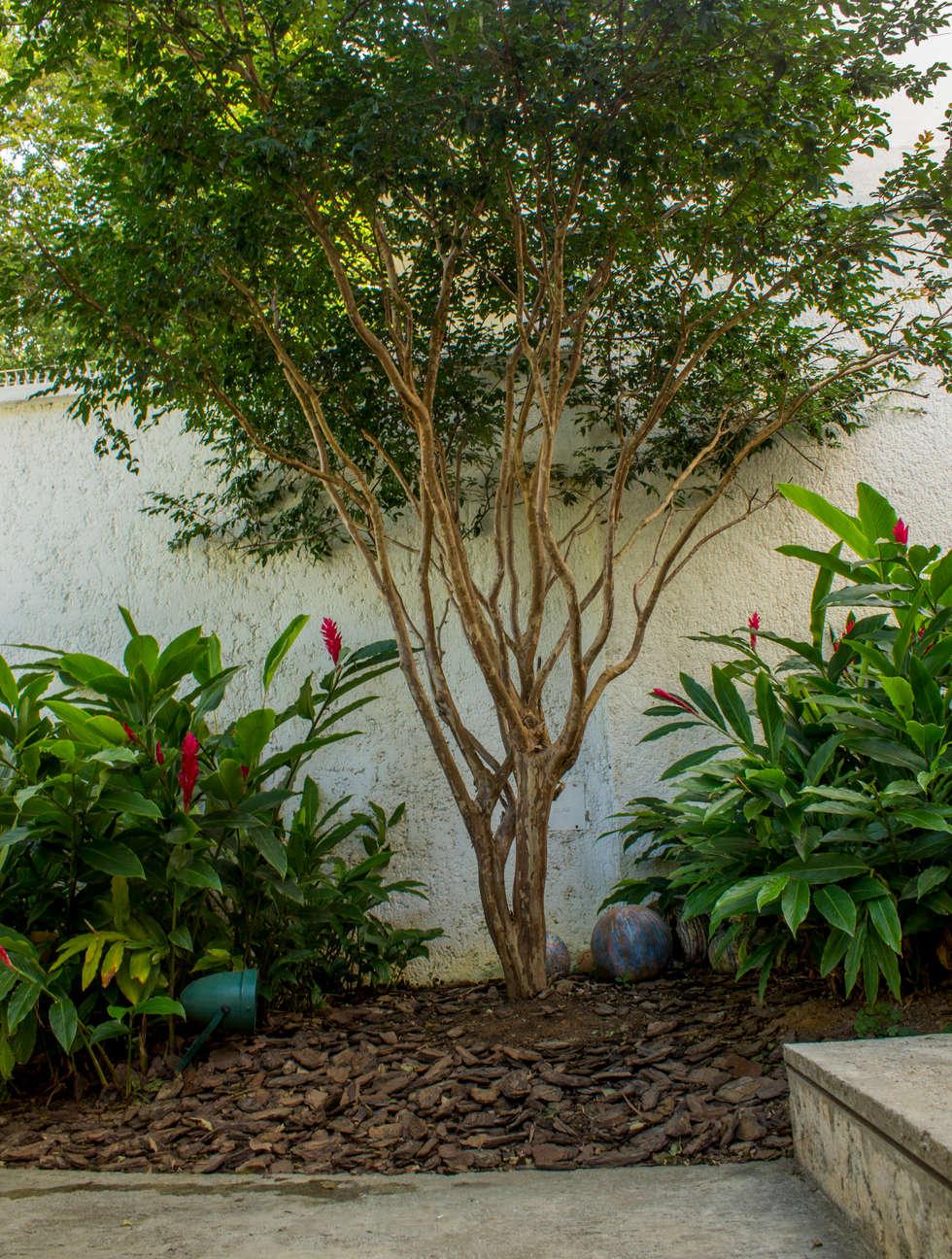 Jabuticabeira : Jardins De Fachadas De Casas Por Amaria Gonçalves   Home  Garden | Feng Shui