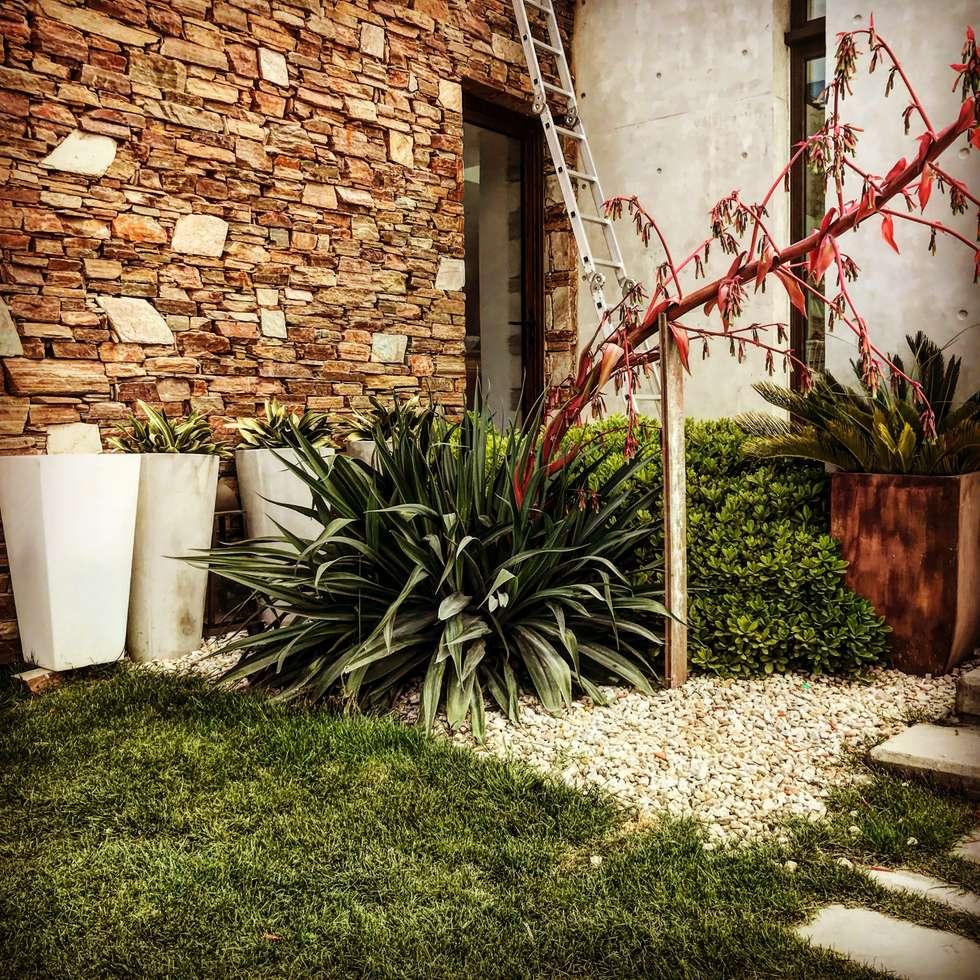 Jardín Moderno: Jardines de estilo moderno por Vivero Antoniucci S.A.