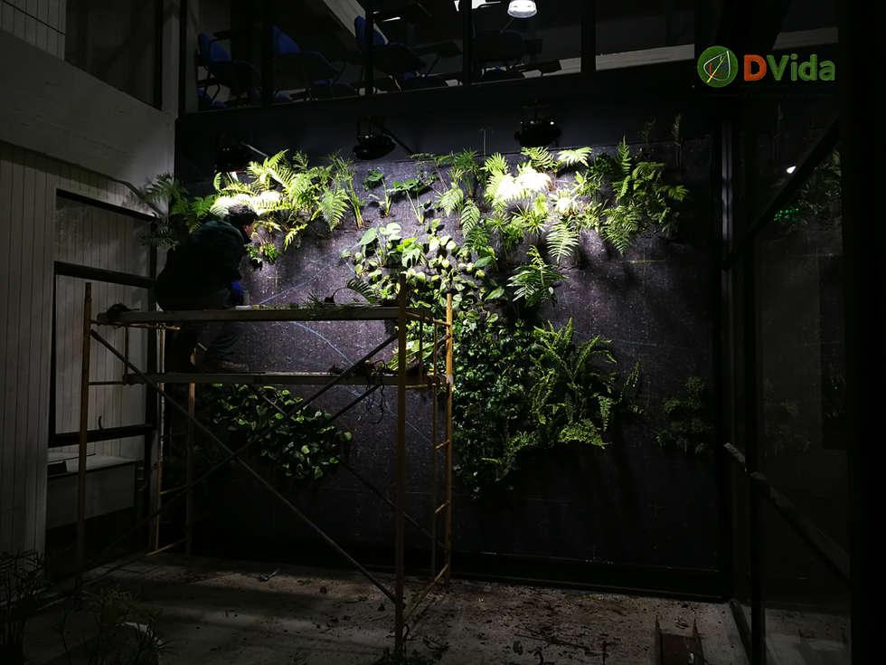 Plantación de muros verdes: Estudios y biblioteca de estilo  por DVida Jardines verticales