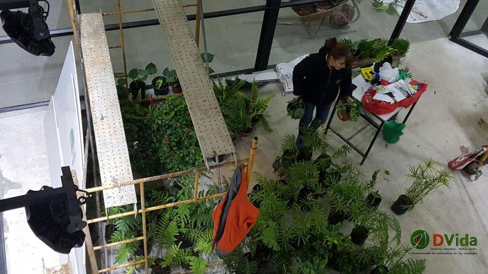 Preparación de plantas muros verdes DVida: Estudios y biblioteca de estilo  por DVida Jardines verticales