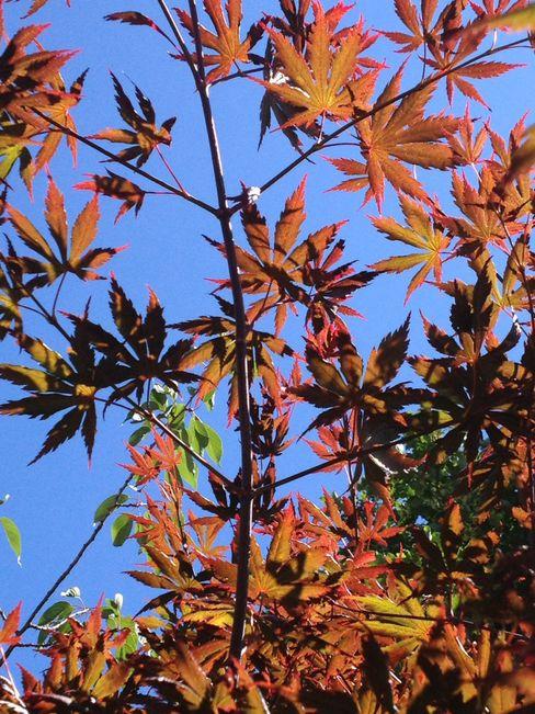 Small courtyard garden Paul Newman Landscapes Moderner Garten
