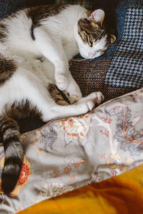 Rufus the cat modelling quilts! Quilts by Lisa Watson BedroomTextiles