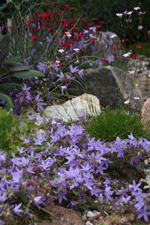 Begleitpflanzen für Kakteen im Steingarten homify GartenPflanzen und Blumen