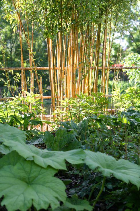 homify Garden Plants & flowers