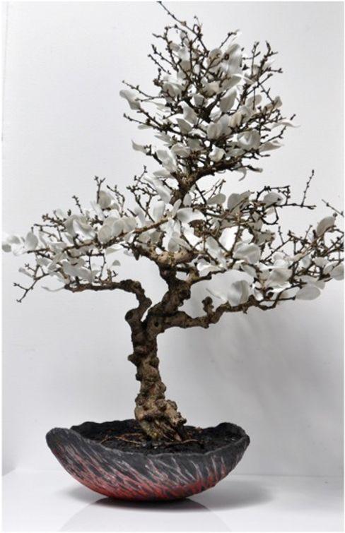 bonsai, petales de porcelaine, coupe raku bbceramic ArtPhotos et illustrations