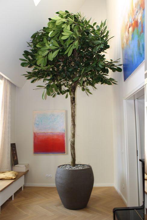 Boom in Huis / Baum im Haus / Trees in the Home Paesaggio d'interni