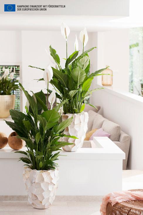 Pflanzenfreude.de Внутрішнє озеленення