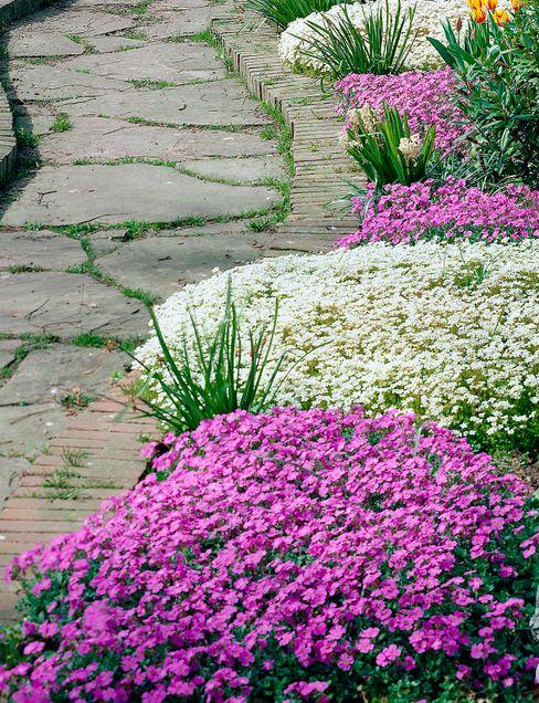 Pflanzenfreude.de GiardinoPiante & Fiori