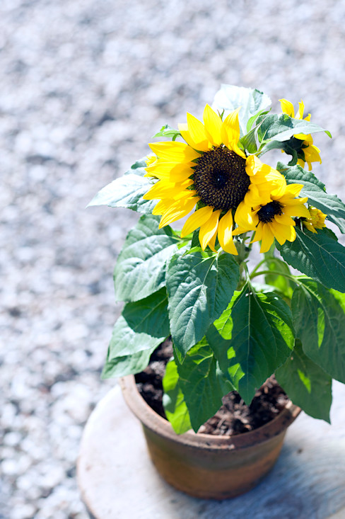 Pflanzenfreude.de JardínPlantas y flores