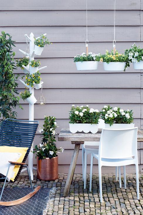 Pflanzenfreude.de 정원식물 & 꽃