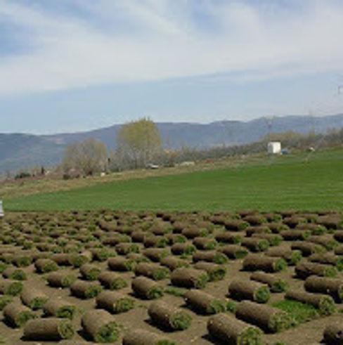 RULO ÇİM HASAT bakış uluslararası çiçekçilik hazır rulo çim üretimi ve peyzaj Endüstriyel Bahçe