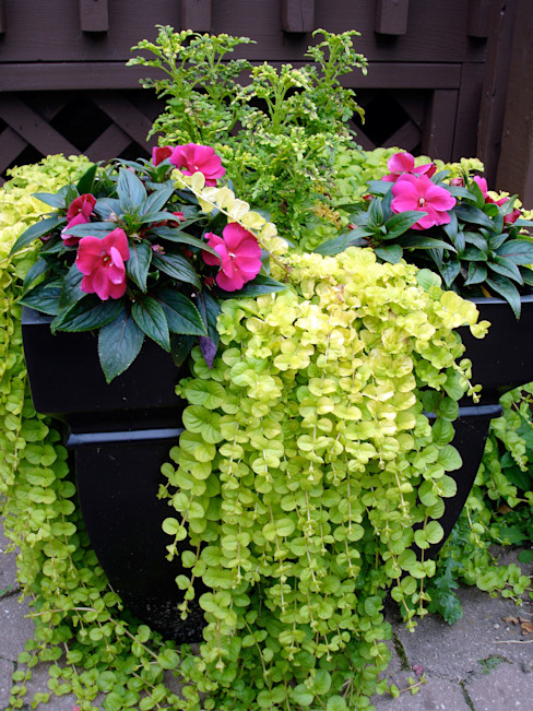 My Little Jardin Classic style garden