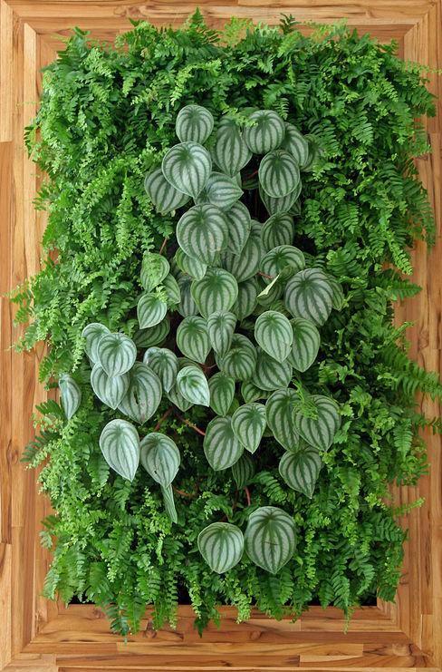 Quadro Vivo Urban Garden Roof & Vertical Garden Plants & flowers