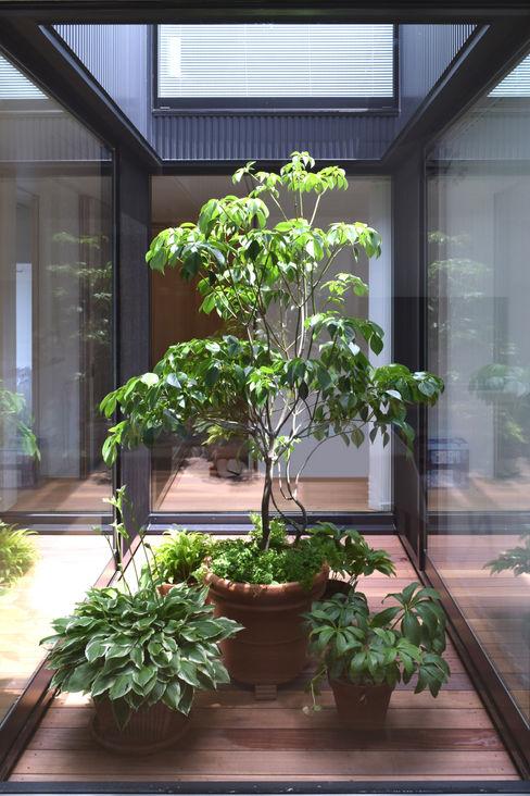 LIGHT COURT with PLANTS FURUKAWA DESIGN OFFICE 庭院