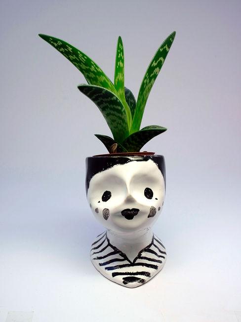 Bubikopf homify HaushaltPflanzen und Zubehör Keramik