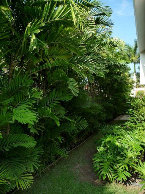 Villa in Nuevo Vallarta Tropical America landscaping JardínPlantas y flores