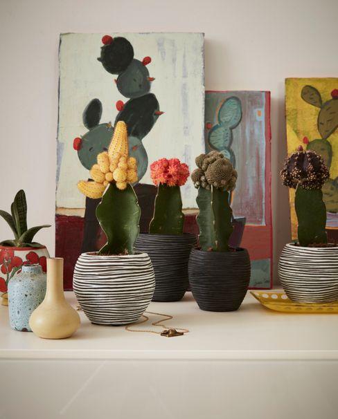 Capi Nature Indoor - Mix of mini pots Capi Europe Living roomAccessories & decoration