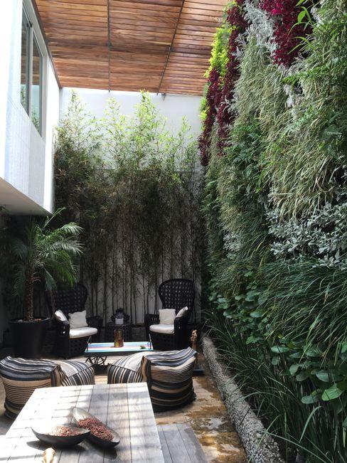 espatium arquitectos sc Patios & Decks Bamboo Green