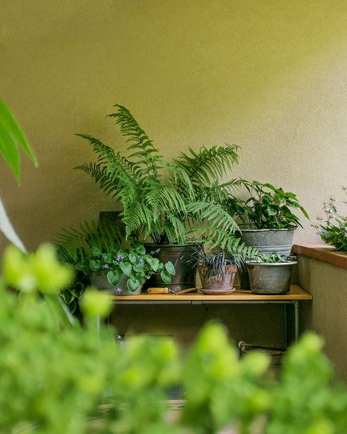 Altro spazio per le piante greenffink Giardino in stile rustico