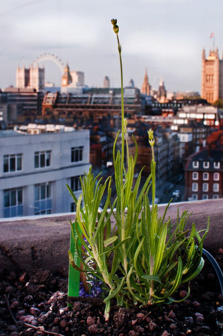 Victoria 2, London Urban Roof Gardens Тераса