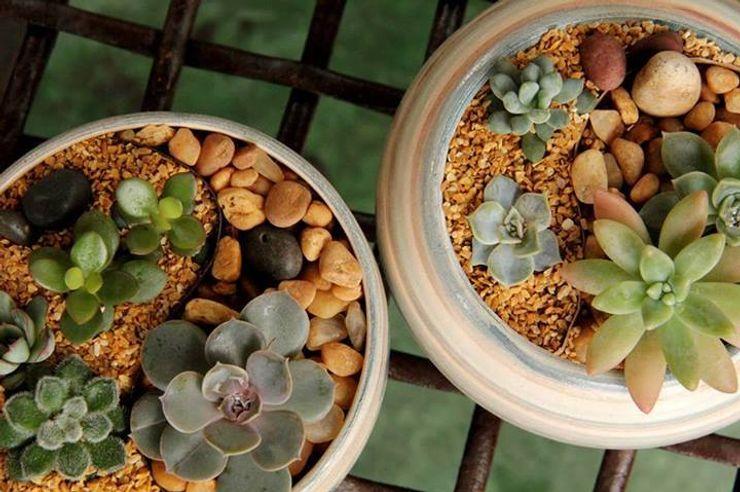 Luiza Soares - Paisagismo GartenBlumentöpfe und Vasen