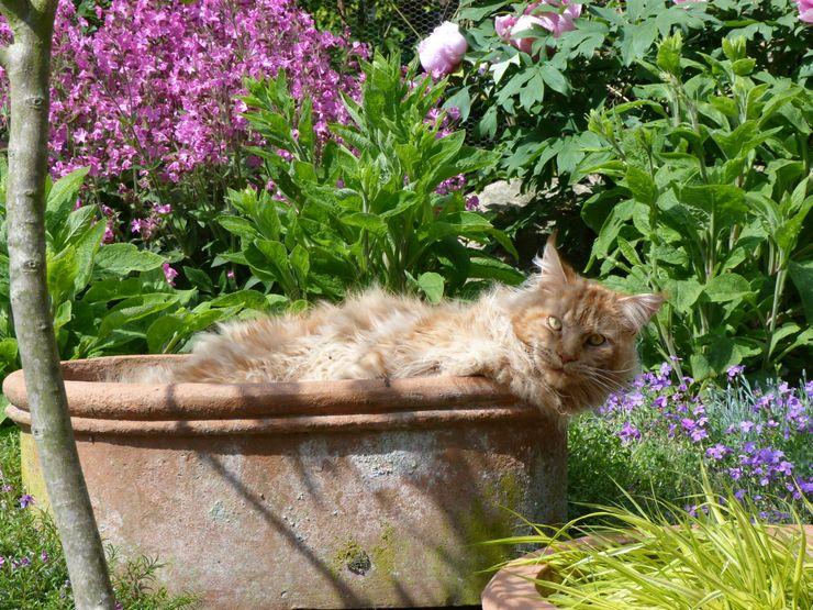 Piet Gärten für Auge und Seele Garten im Landhausstil