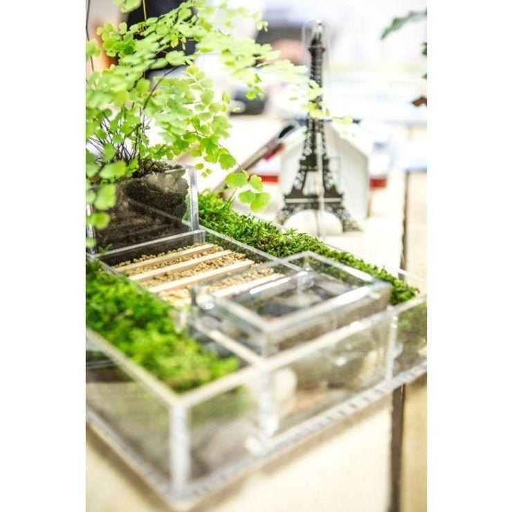Niwabox - Giardini in scatola Designtrasparente CasaAccessori per Animali