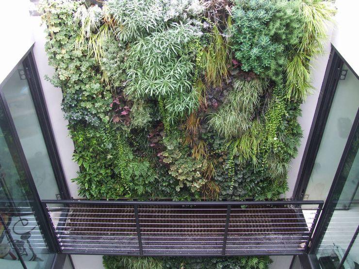 Lightwell, Clapham Biotecture Interior landscaping