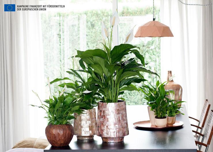 Pflanzenfreude.de Paisajismo de interiores