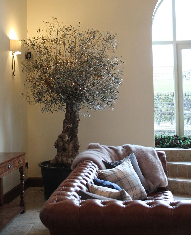 The Indoor Olive Tree Vanessa Rhodes Interiors Eklektik Oturma Odası
