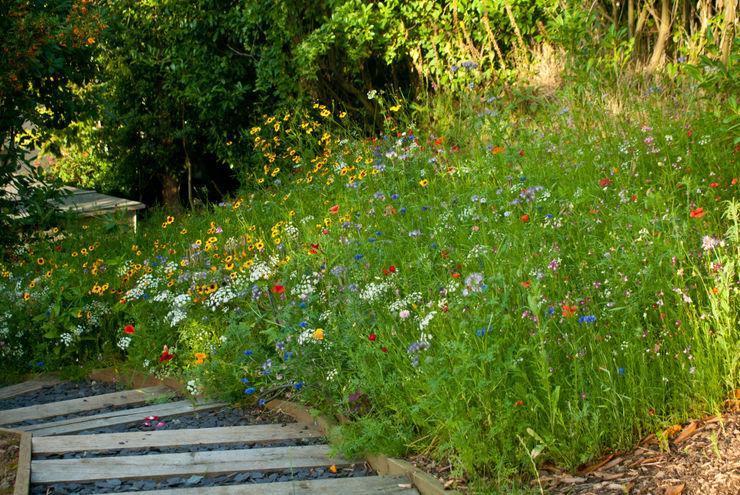 Wildflower Seed Meadow with Sleeper steps Katherine Roper Landscape & Garden Design Country style garden