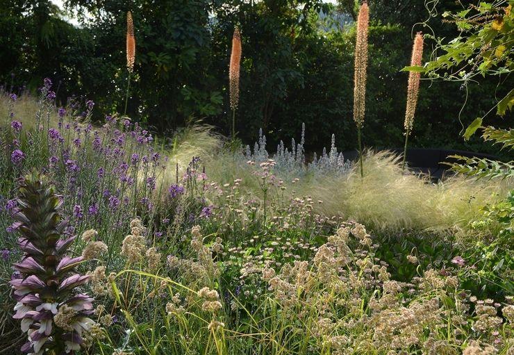 Planting on a bank with Eremurus Katherine Roper Landscape & Garden Design Country style garden