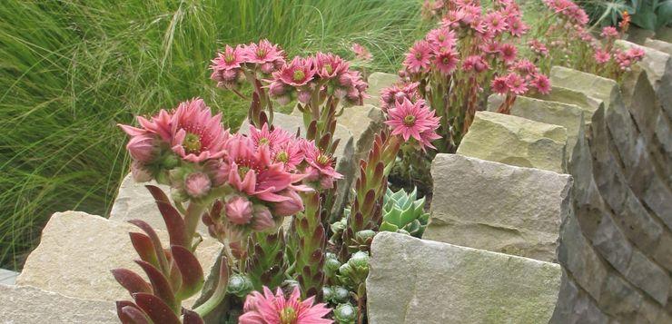 Sempervivens in stone wall Katherine Roper Landscape & Garden Design Rustic style garden