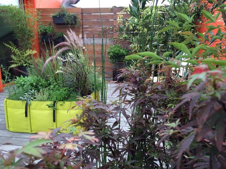 Projet d'aménagement d'une terrasse en oasis végétale à Paris BACSAC® Balcon, Veranda & Terrasse tropicaux