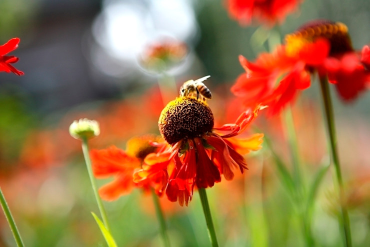 Nature rich garden good for bees and other insects/ Natuurrijke landschapstuin met bloemrijke beplanting goed voor bijen ea. insecten. FLORERA , design and realisation gardens and other outdoor spaces. Garten im Landhausstil